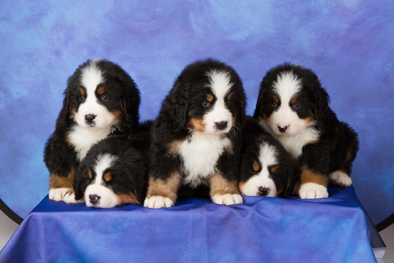 2013-Pearson Pups-Jun02-0313.jpg