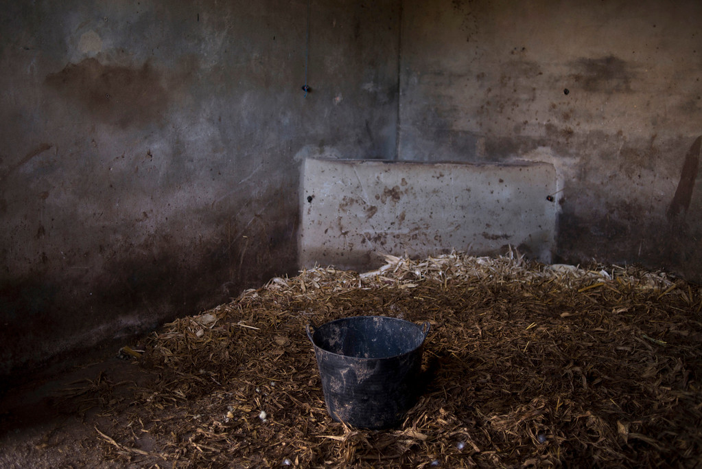 """. In this photo taken on Tuesday, April. 8, 2013, an empty stable is seen at \""""La Yeguada de la Nobleza\"""" ranch belonging to Francisco Mesa in Almonte, in the southern Spanish region of Andalusia. Barring an unlikely reprieve, Mesa\' purebreds will be turned into horse meat for export come July. They are victims of a wrenching economic downturn that has wiped out fortunes, turned housing developments into ghost towns and left more than a quarter of the population out of work. (AP Photo/Laura Leon)"""