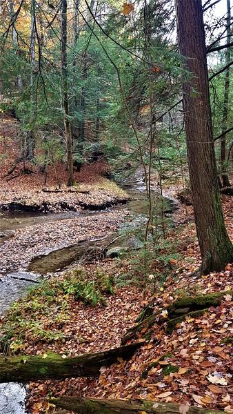 Wyvlle Creek East Ravine 20201023_155853 G McKenna.jpg
