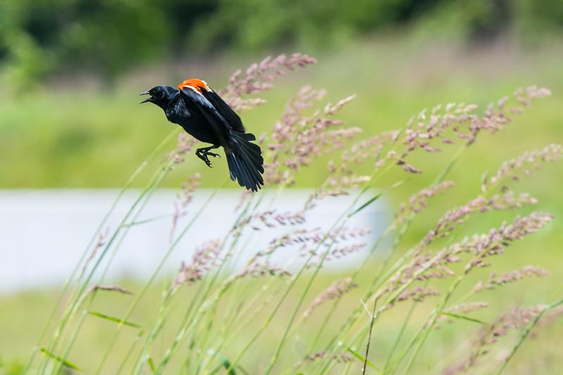 2019.06.07-Birds-10.jpg