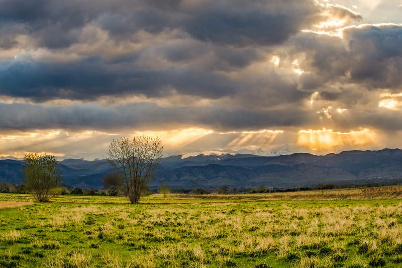 Foothills Majesty