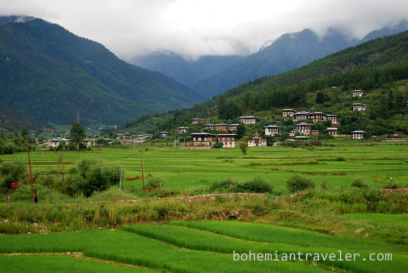 Paro Valley rice and homes.jpg