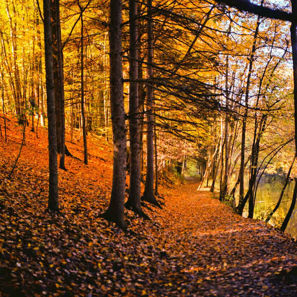 Autumn Hike 120 Film-00018.jpg