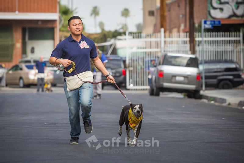 Dog Walking Class