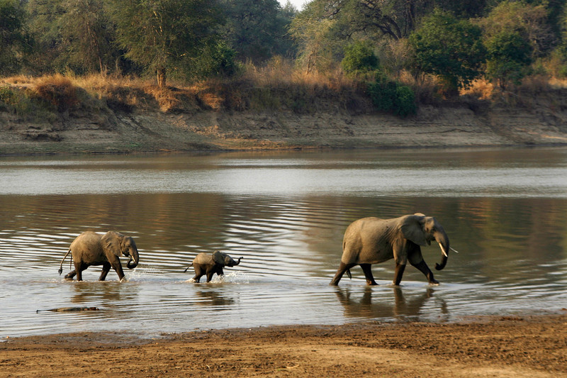 SOUTH LUANGWA RIVER - ZAMBIA