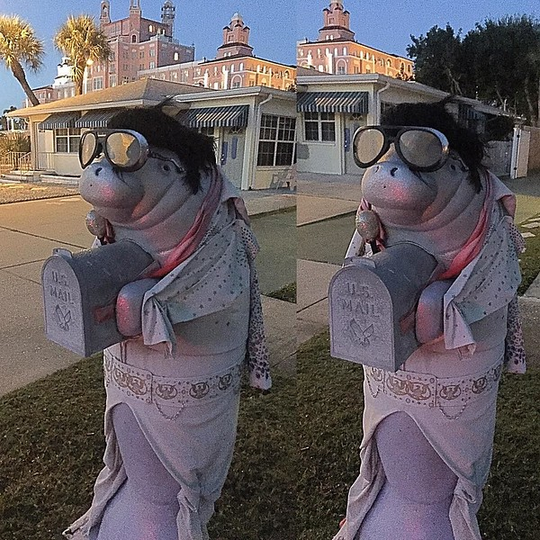 Elvis the #Manatee #Florida in St. Pete's Beach #Florida