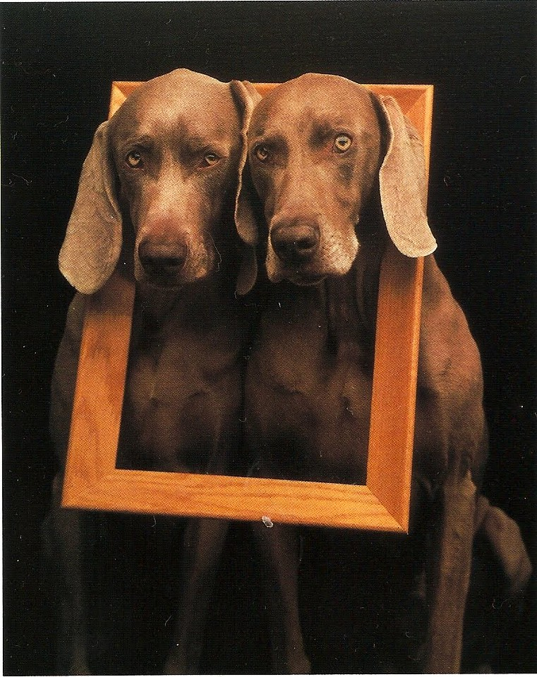 Photographer - William Wegman