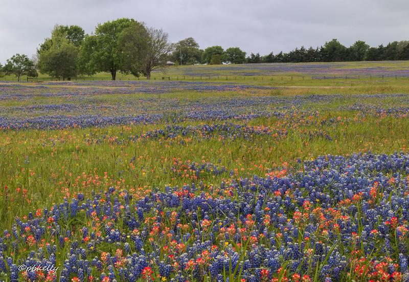 flower hill 040618-6.jpg