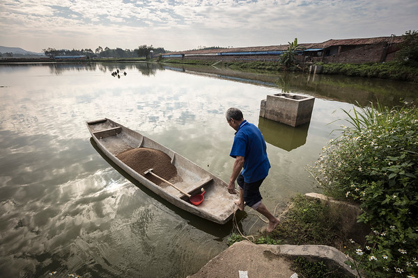 Pig Farming and Aquaculture in South China