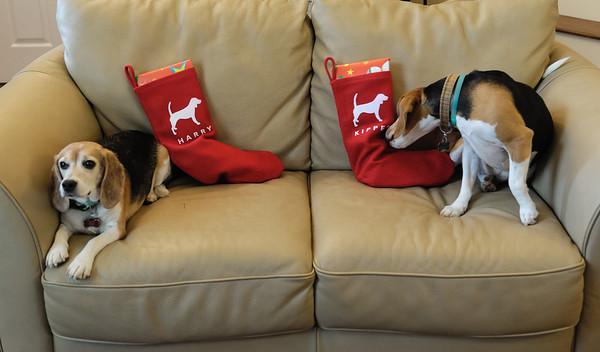 2012 Christmas Dogs