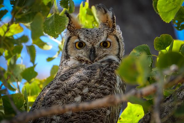 Birding at Rocky Mountain Arsenal