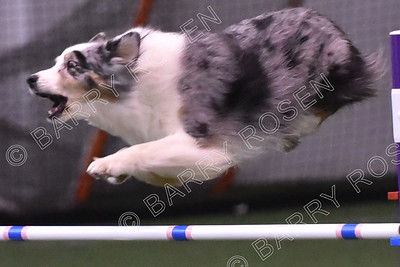 SICDTC AKC Agility Trial, November 2-4, 2018