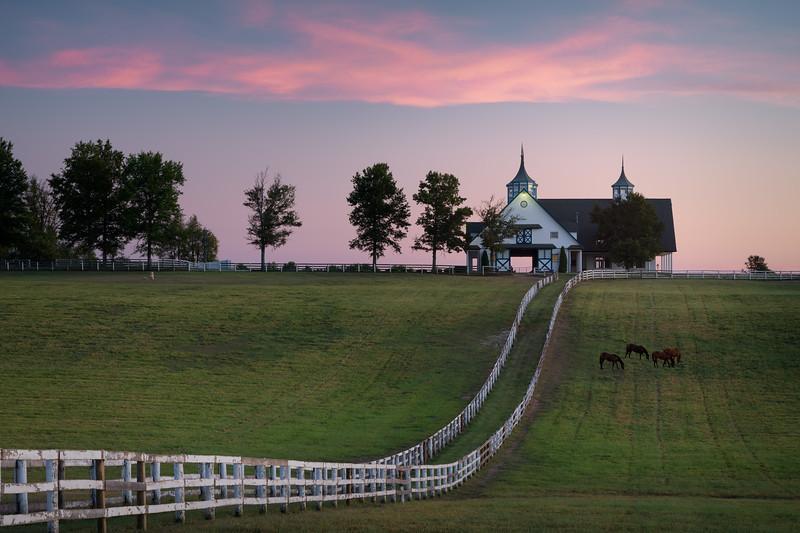 Twilight Graze || Fayette County, Kentucky