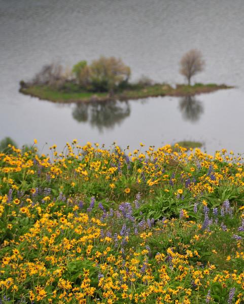 wildflowers5.jpg