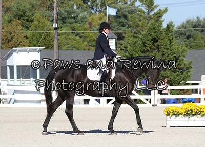 Tuesday Gold Ring Class 138: Materiale Class Three Year Old Fillies
