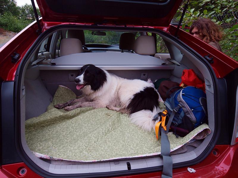 Junie enjoys the new Prius.