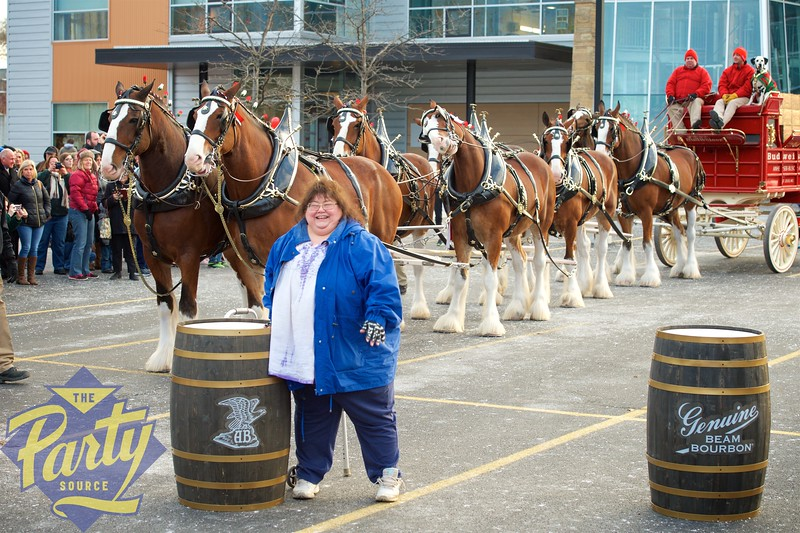 Clydesdale Portraits 158.jpg