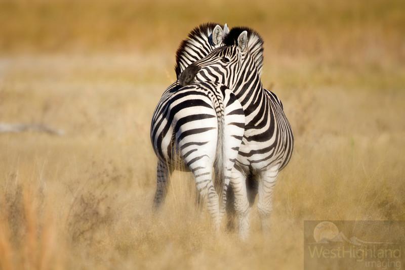 Botswana-20110715-2451-Edit-4-Edit.jpg
