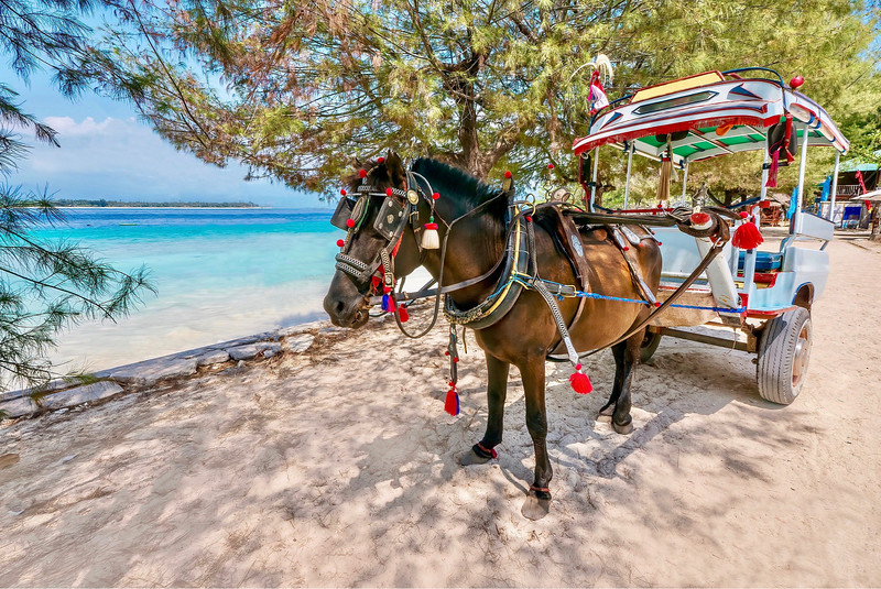 Things to do in Lombok - Horse carriage ride