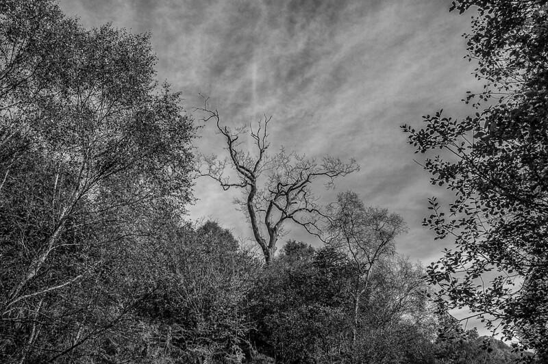 Leitir Fura Tree