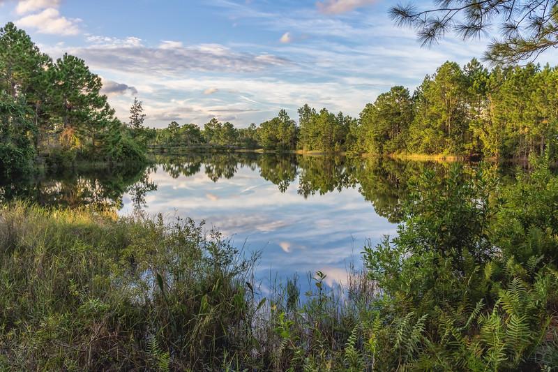 Golden hour at a pond at Split Oak Forest