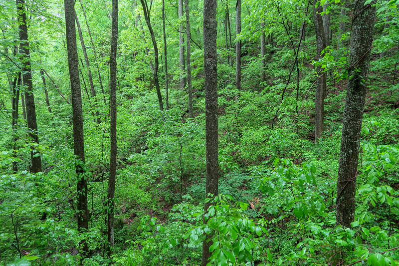 Ingles Field Gap Trail -- 2,660'