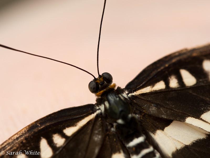 140503_ButterflyHouse_363.jpg