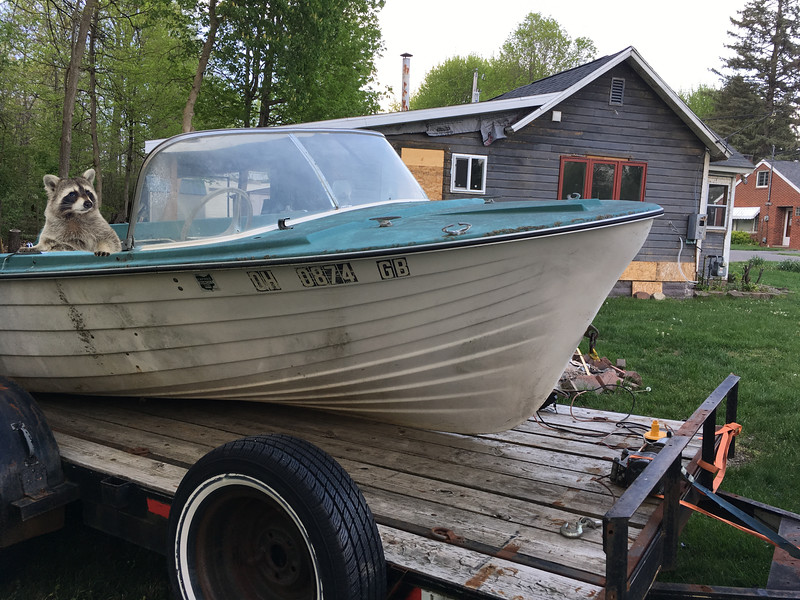 Ringtail-Boat.jpg