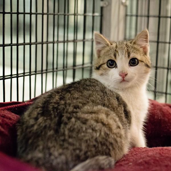 diggler SAFE Haven for Cats March 19-03_19_14-113.jpg