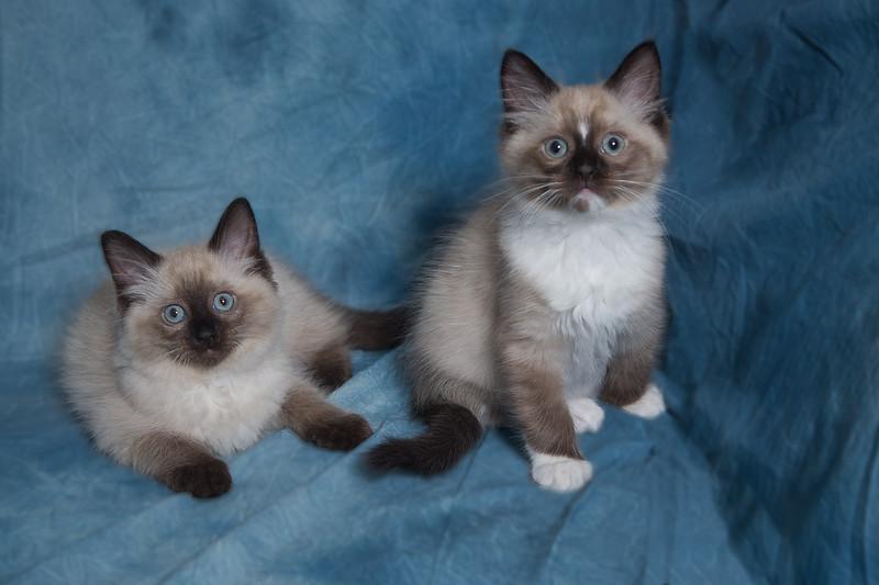 Walt kittens-27.jpg