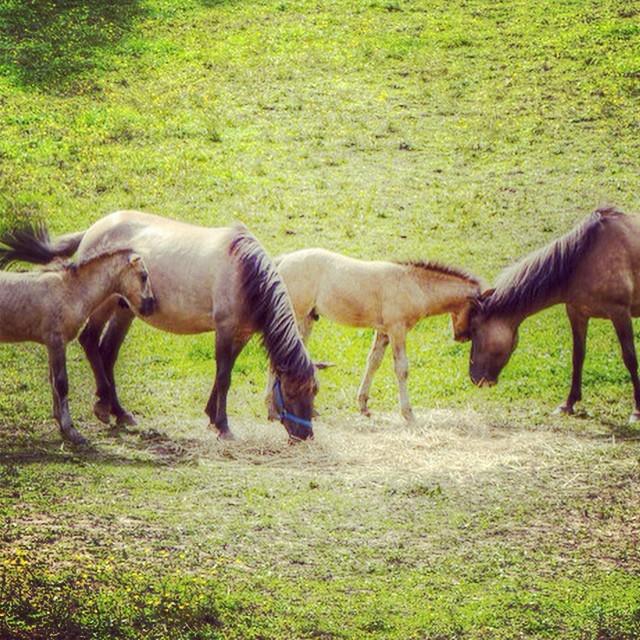 horses brastad sweden