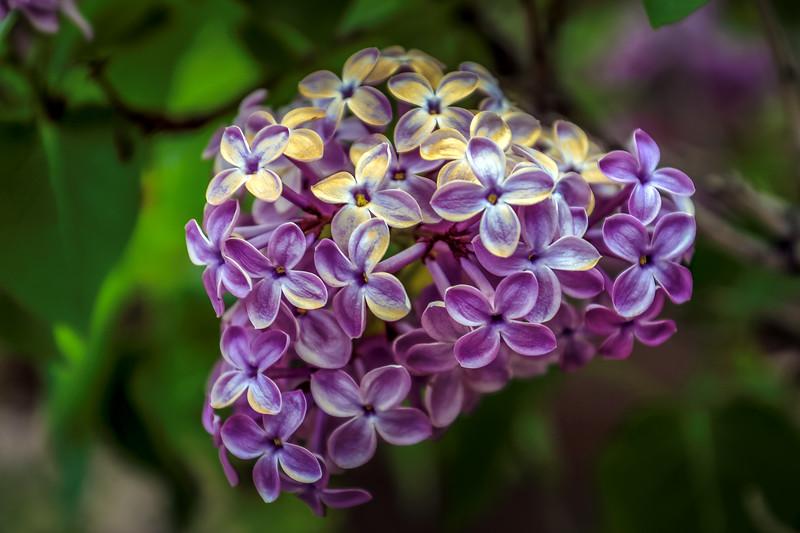 FlowerBackyardErieCO-002