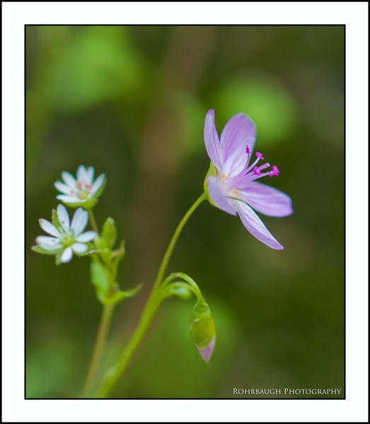 Rohrbaugh Photography Flowers 87.jpg