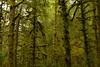 Ecola State Park in Oregon