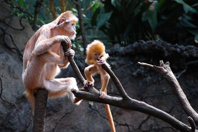 Bronx Zoo, 1-Jul-07