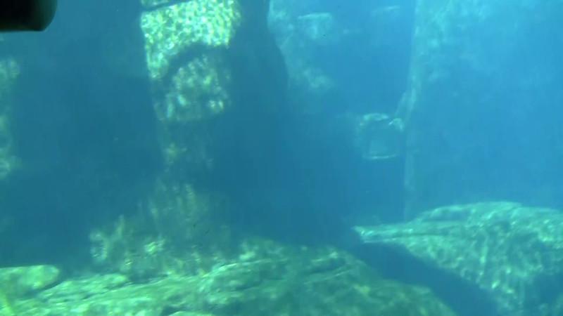 2010_Vancouver_Aquarium_4.mpg