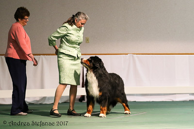 Veteran Sweeps 7-9 yr Dogs- Camera #2  BMDCA 2017