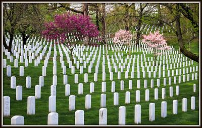 Arlington National Cemetery 2015