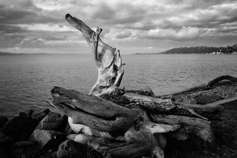 Driftwood Siren