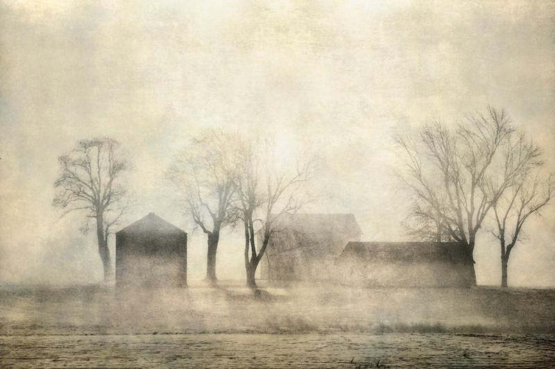 Foggy farm_1.jpg