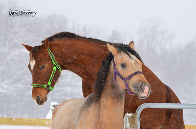 march horses playing