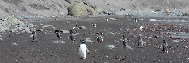 2019_01_Antarktis_01797.jpg