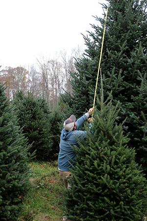 Gardner-Webb Christmas Tree