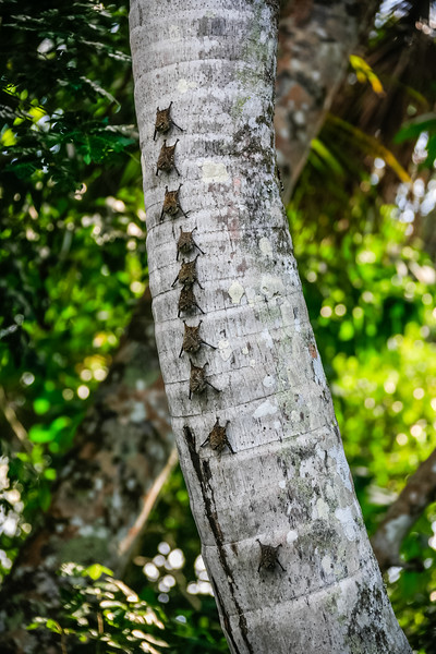 Close-up of bugs forming line on tree trunk - Peru