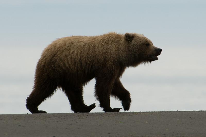 Alaska-87.jpg