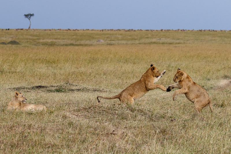 Kenya 2015-06030.jpg