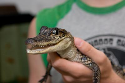 Gabe's Aligator
