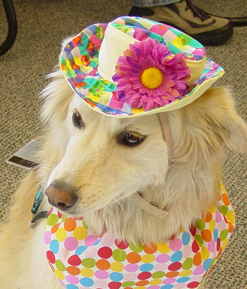 . Among the other canines working the Mineta therapy dog beat is Goldie who was the third dog to join the program back in 2002. She is the longest serving canine in the program, working with Linda Smith.