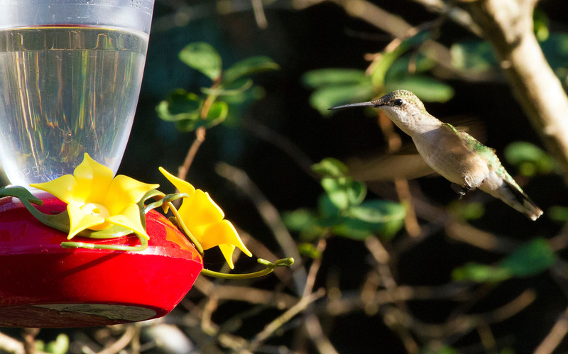 hummingbirdatfeeder5.jpg