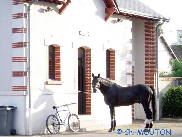 Cheval - Cavalier